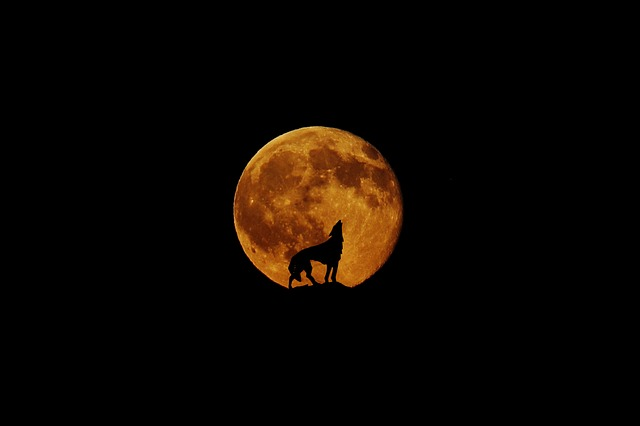 We Are Kicking Off 2019 With A Full Blood Super Wolf Moon Lunar Eclipse!